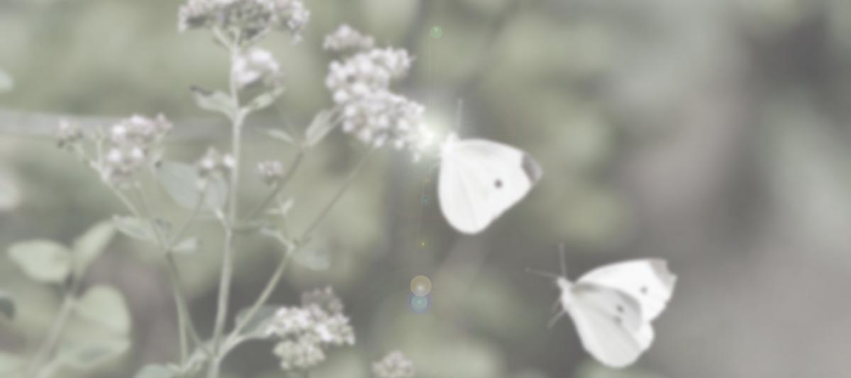 アンティークジュエリー パピヨン インタリオ 水晶 ルーヴルアンティークのモノローグ